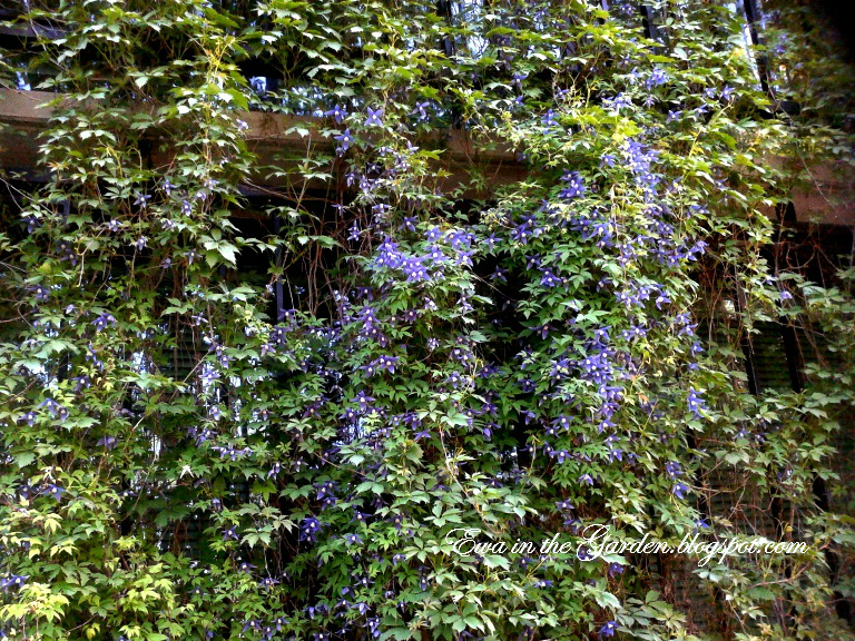 Ewa In The Garden Cute Green Living Walls Idea Creative