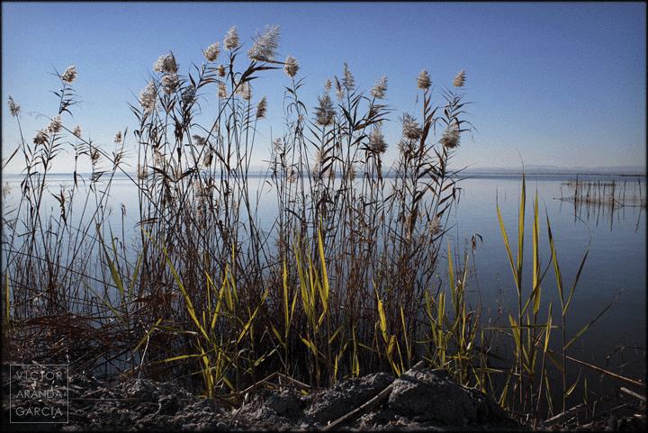 fotografía, albufera, valencia, naturaleza, paisaje