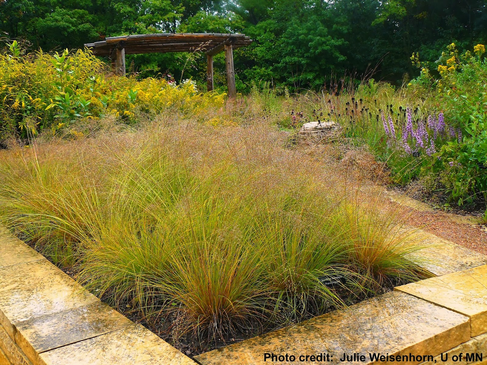 Plants ridiculousness sway bob and quiver part 1 for Using grasses in garden design