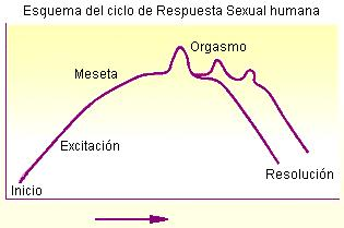 La respuesta sexual humana Persum