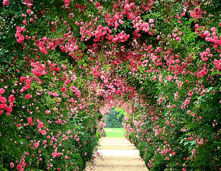 Rose Garden Wallpaper   WallpaperSafari