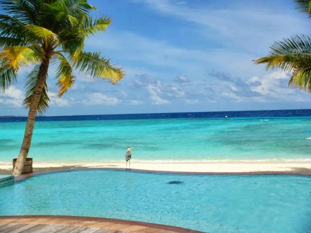 maldives north ari atoll