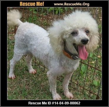 http://freedomscall.rescueme.org/