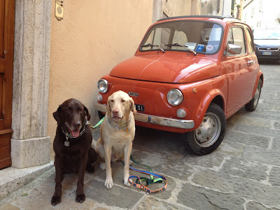 Flying Dogs To Italy : Boomer and Harley in Montepulciano, Italy (Thanksgiving 2012)