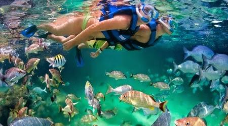 Deportes Snorkel Agua