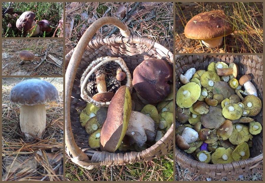 grzby jesień w lesie
