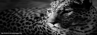 Couverture facebook tigre en noir et blanc