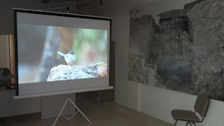 Audiovisual aves