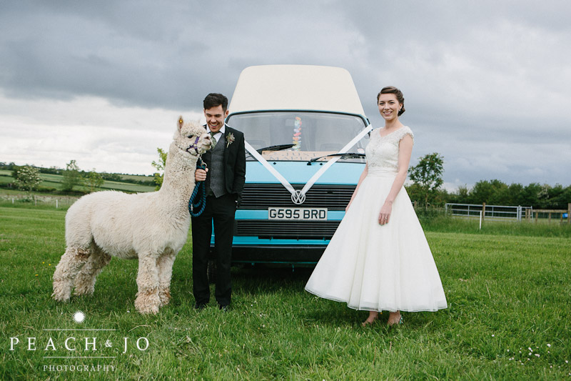 wedding alpaca vw camper van