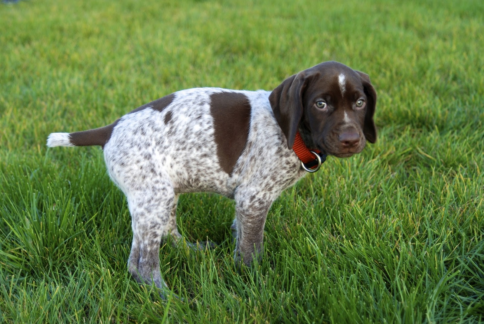 Best Small Sporting Dogs