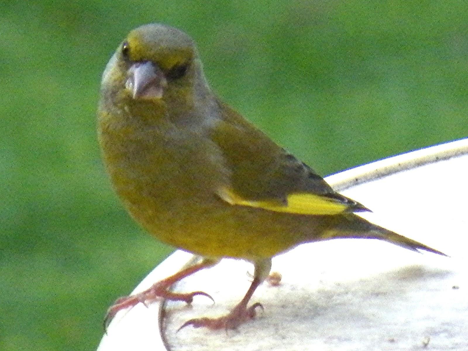 du four au jardin et mes dix doigts l 39 oiseau vert