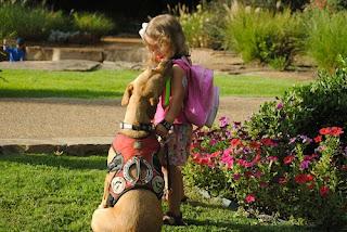 10 Pengobatan Aneh Menggunakan Hewan