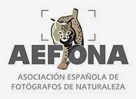Aefona