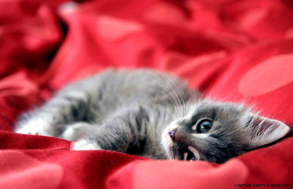 Cute Kitten Wallpaper   Kittens Wallpaper 16094680   Fanpop