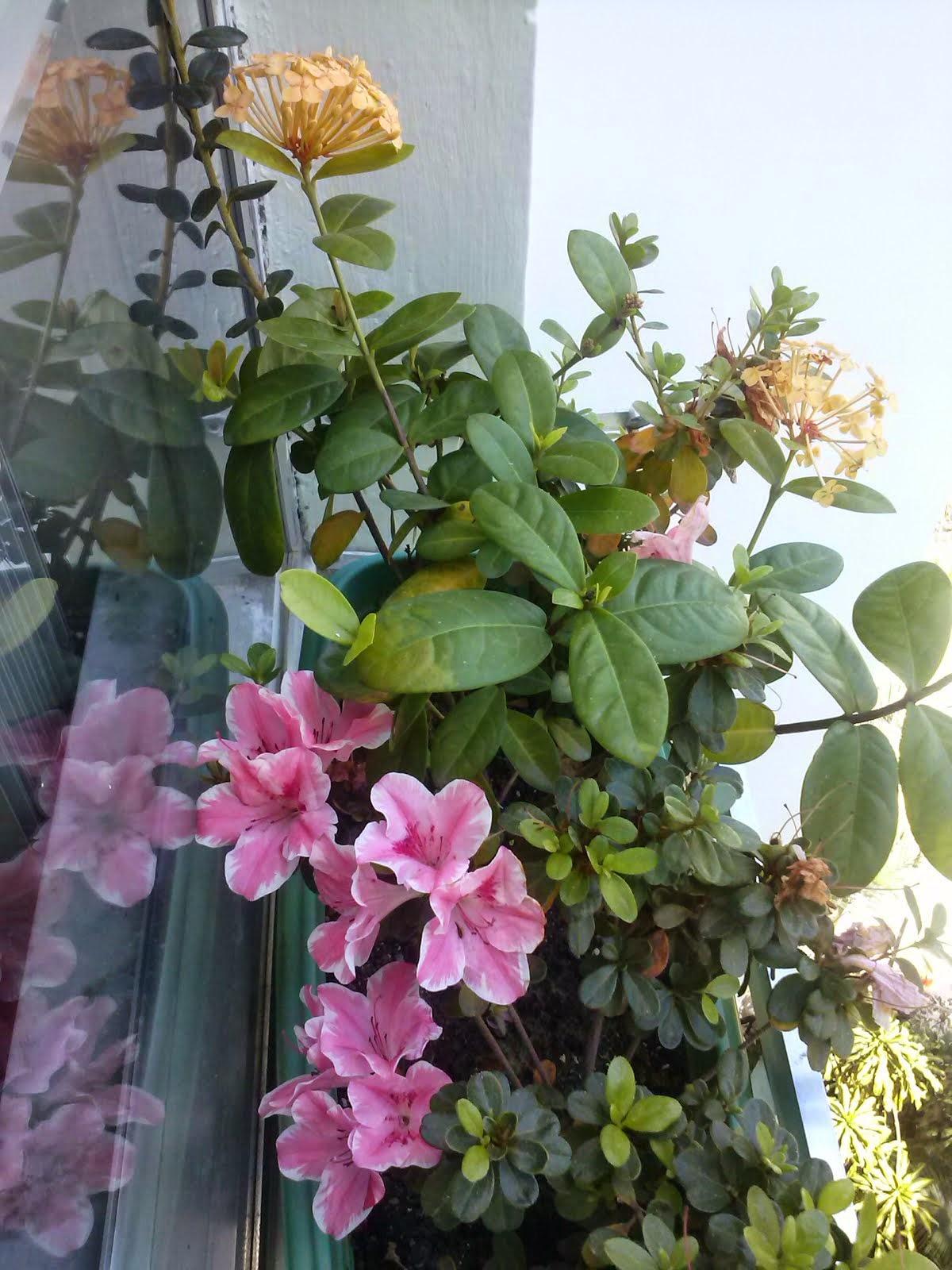 Minha jardineira