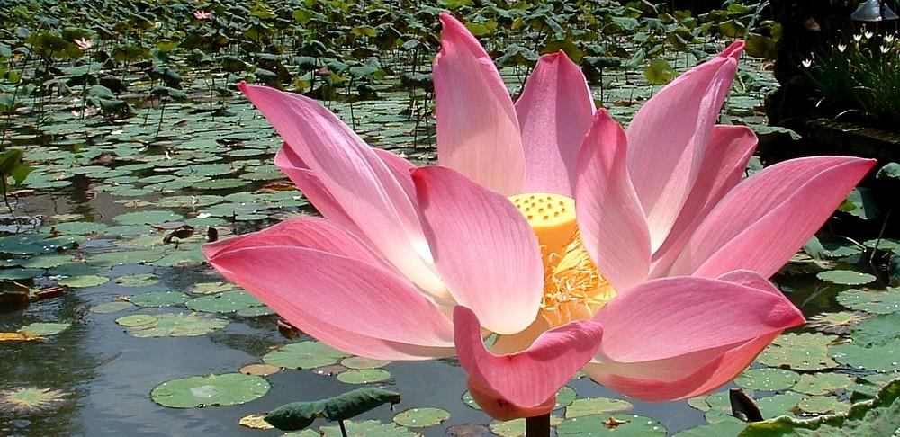 Buddha download sadaham kirula 04a3 sadaham kirula 04b3 mightylinksfo