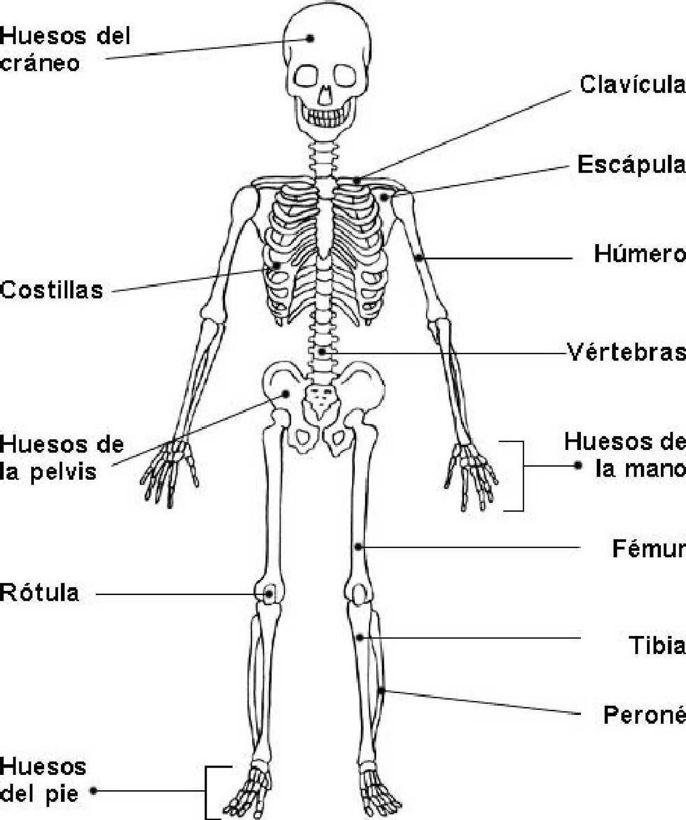 ENFERMEDADES DEL CUERPO HUMANO: Sistema Oseo