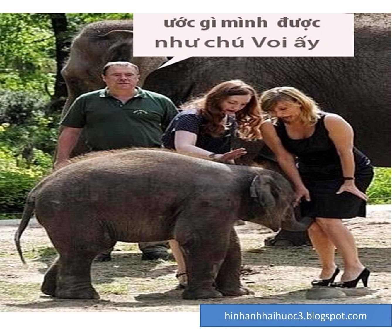 Hình ảnh vui về voi con