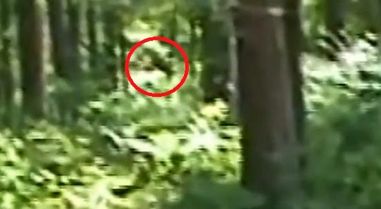 Bigfoot Tape Mississippi