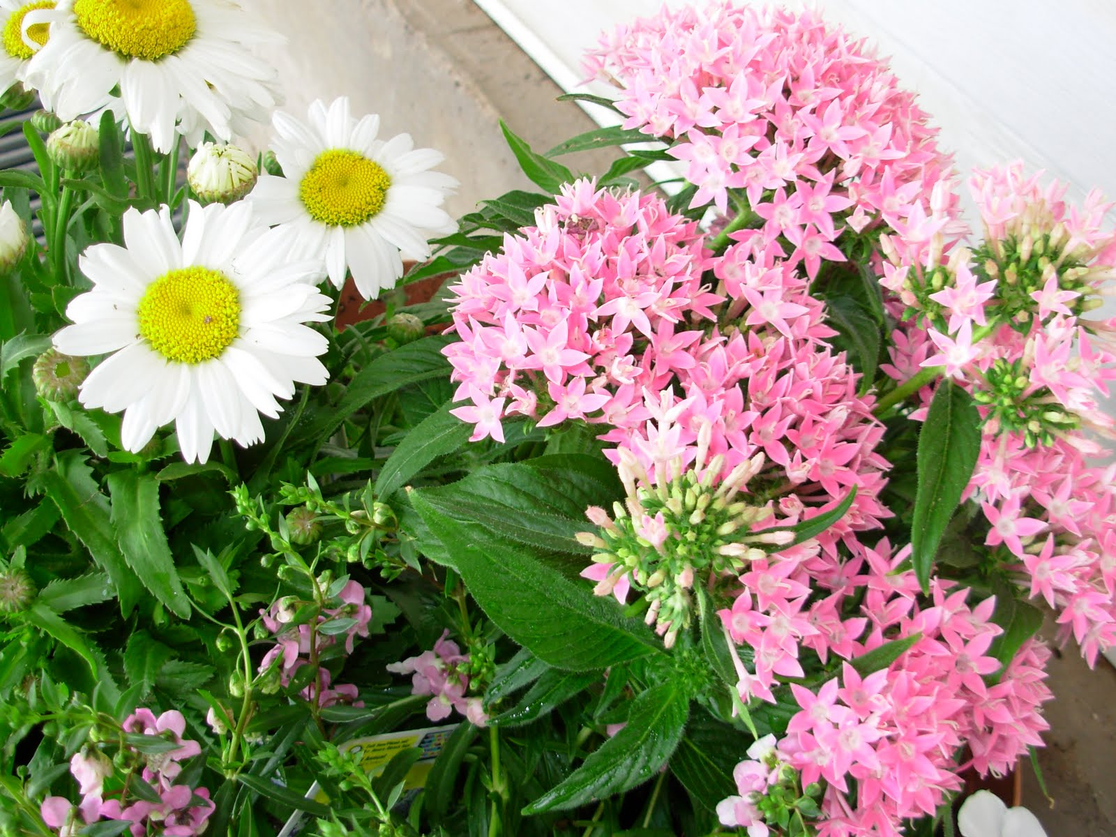 Senseless Ramblings Of The Mindless Planted My Flowers