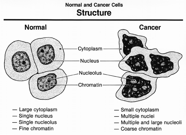 external image cancer+cell.jpg