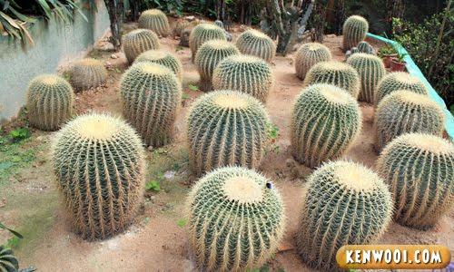 cameron big cactus