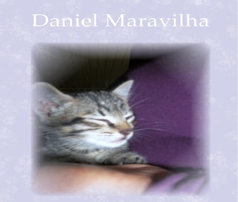 Daniel Maravilha