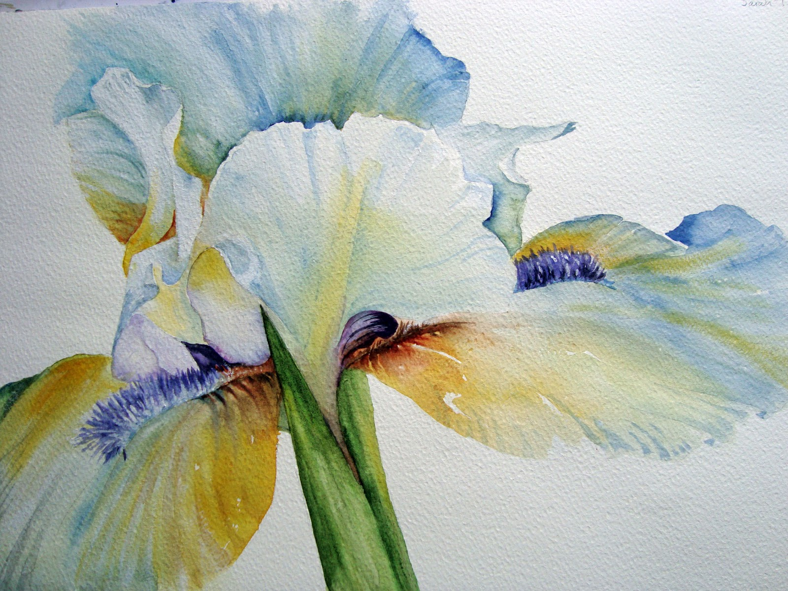 Watercolour florals white iris i then proceeded to add the background to the painting i filled each area with similar but stronger mixes of the original colours wet into wet and then izmirmasajfo