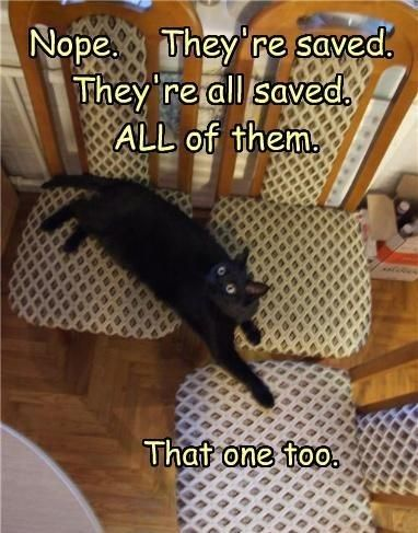 Catnip - They're All Saved