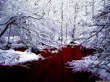 Bosques de sange
