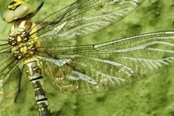 Libellenflügel...