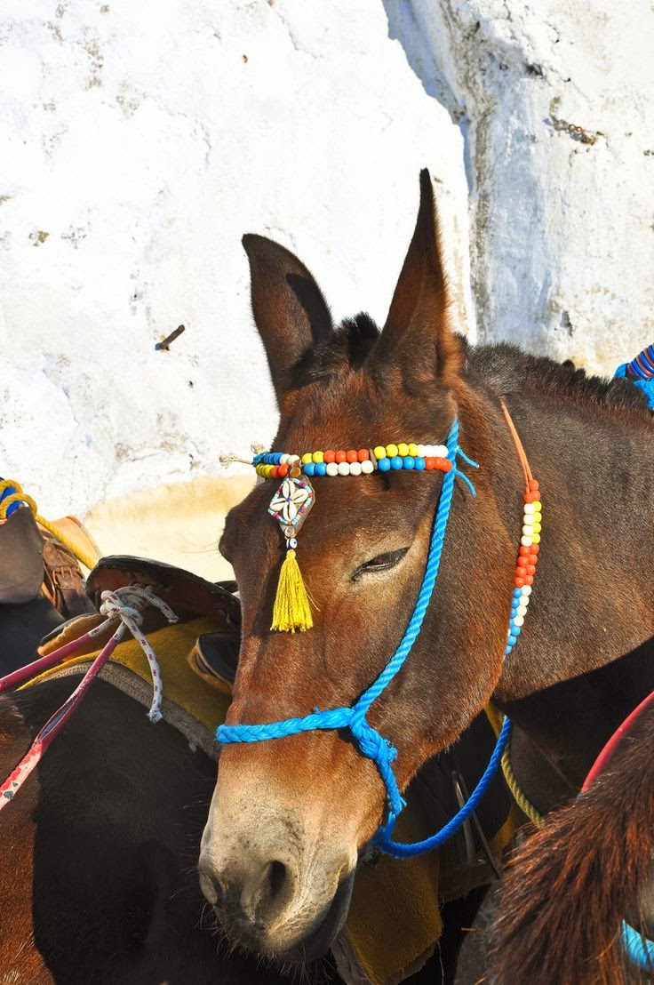 The Mules of Santorini