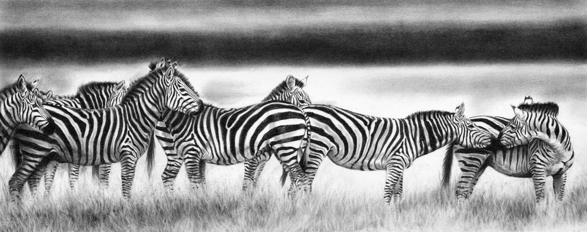 17-Zebra-Panorama-Hyper-Realistic-Wildlife-Peter-Williams-www-designstack-co