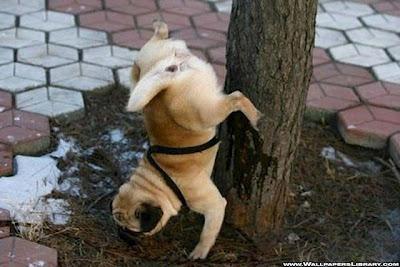 Gambar Anjing Lucu Menarik Terbaru 2012