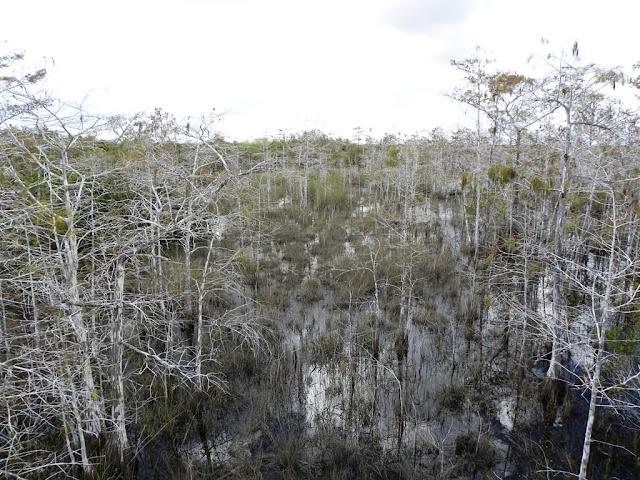 Pa-Hay-okee Everglades