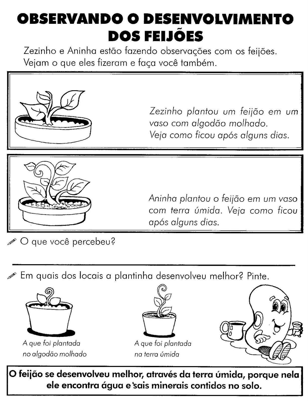 ATIVIDADES DE CIÊNCIAS 2° ANO  PLANTAS I  ATIVIDADES E DESENHOS