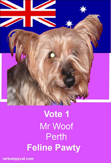 Mr Woof's feline pawty campaign poster: Image of Mr Woof in front of an Australian flag. Text: Vote 1 Mr Woof Perth Feline Pawty