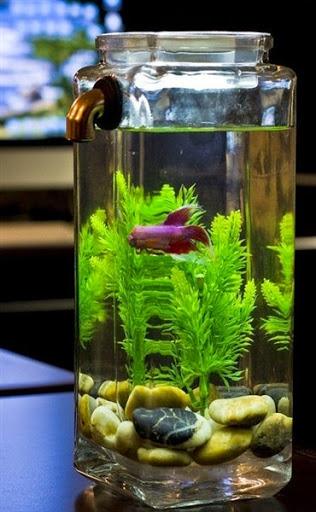 Model Aquarium Ikan Hias yang Simple Sederhana Unik dan Minimalis Terbaru
