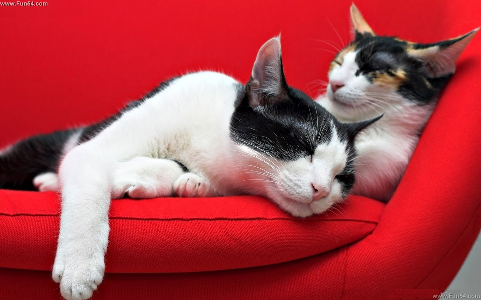 http://3.bp.blogspot.com/-w8n9MS9F9WU/T-3CW6PxZ6I/AAAAAAAAA7I/yr8_w7VC3OM/s1600/Cute-Black-White-Home-Cats-Pair-Sleeping-Together-on-the-Sofa-Red-Background-Wallpaper.jpg