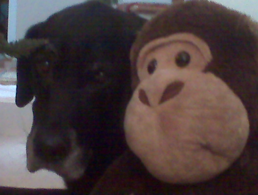 I Miss You Monkey. We will miss you, Monkey.