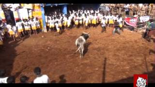 Smile Please | kollywood Jolly Jallikattu | Vikatan TV