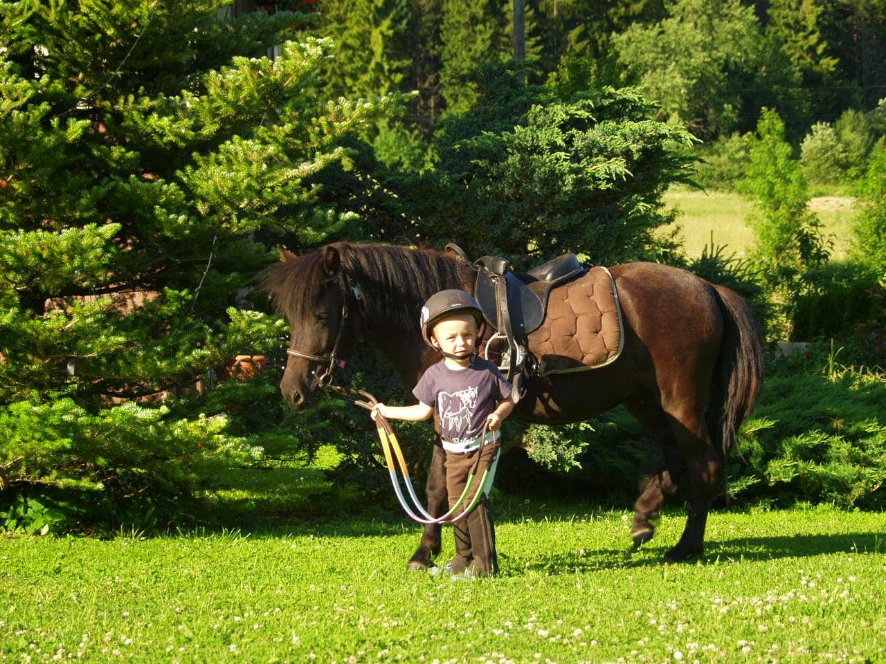 kuc pony Felicja
