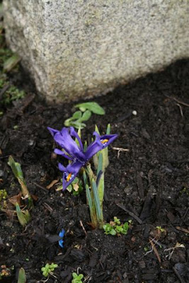 Mini iris