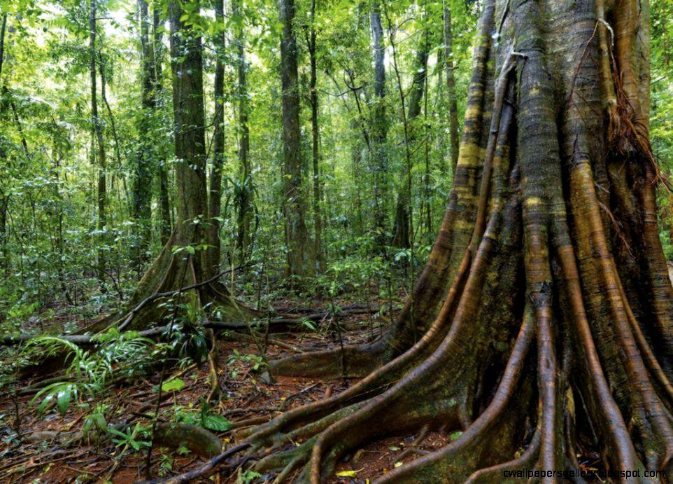 Warm Temperate Rainforest   an Australian habitat   Steve Parish