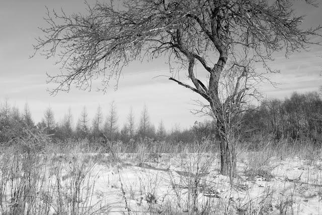 Jurajski krajobraz zimowy. Fotografia krajobrazu. Jura krakowsko-czętochowska, dolina Pradnika, Pieskowa Skała. fot. Łukasz Cyrus