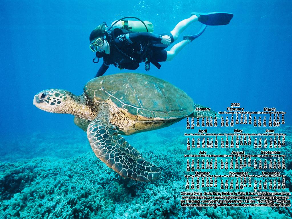 http://3.bp.blogspot.com/-wAMyTZ0zzOc/TxMJxR1AaQI/AAAAAAAAAAc/WJrC3y96VwM/s1600/divingholidaysmaltadesktopwallpaper7.jpg