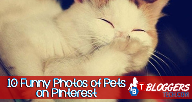 10 Funny Photos of Pets on Pinterest