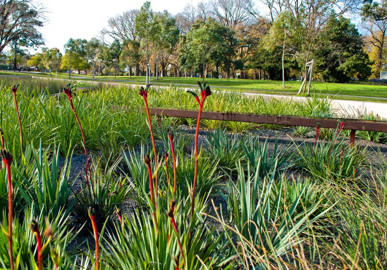 Biotic design studio edinburgh gardens raingarden
