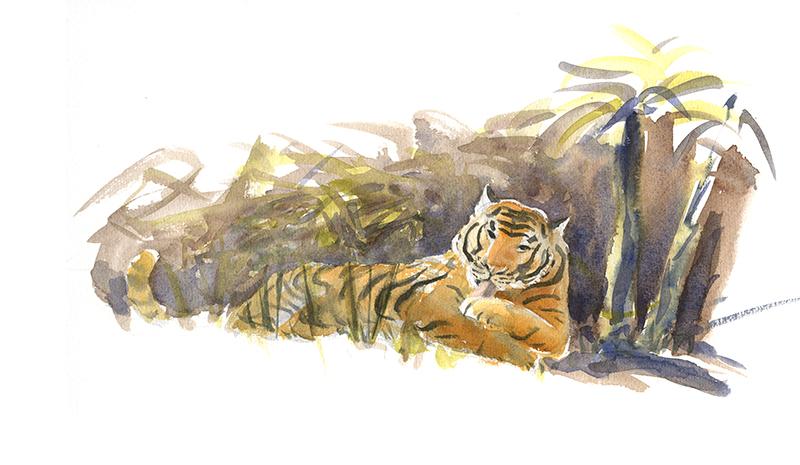 Tigre à l'aquarelle