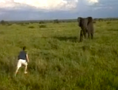 South African Man Charges Wild Elephant